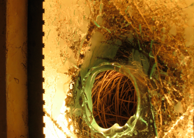 AIA exhibit - detail of light box with bird's nest inside