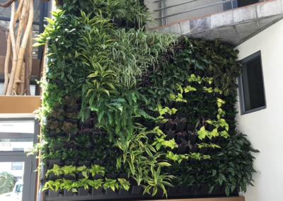 Custom living wall system with grid design in hand picked plant selections - painting with plants